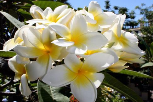 Sitio Litre Orchid Gardens