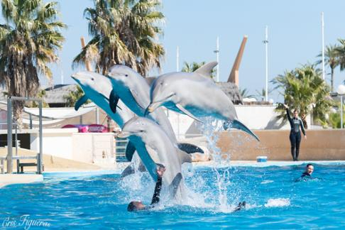 Aquopolis Salou Offers Discounts Cheap Tickets Buy Online - Billet port aventura groupon