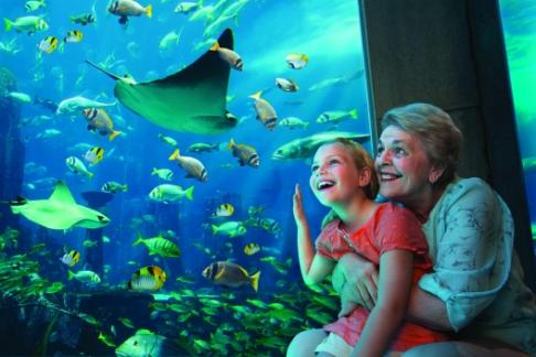 Click to view details and reviews for Lost Chambers Aquarium Day Admission.