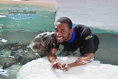 Miami Seaquarium Seal Swim