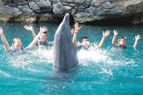 Delphinus Dolphin Experiences