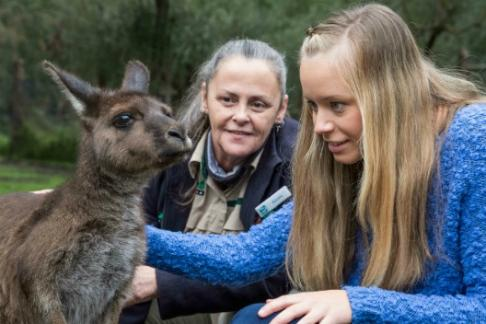 Click to view details and reviews for Healesville Sanctuary Entry Ticket.