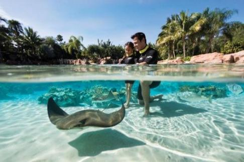 Discovery Cove Ultimate Package Winter Offer