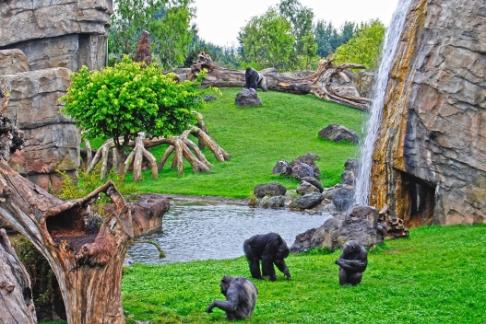 Click to view details and reviews for Bioparc Valencia Standard Ticket.