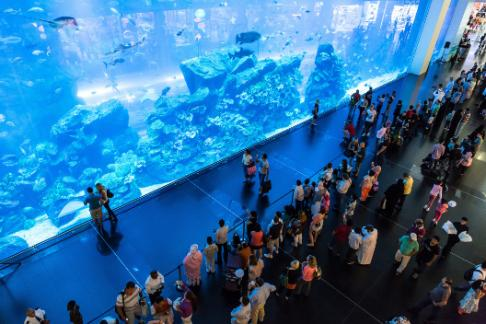 Click to view details and reviews for Dubai Aquarium Underwater Zoo Researcher Package.