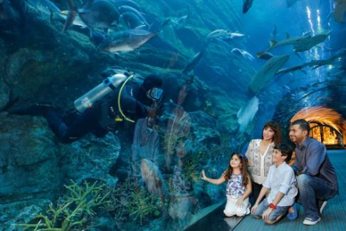 Click to view details and reviews for Dubai Aquarium Underwater Zoo Explorer Experience.