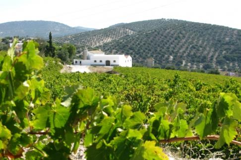 Lagar Blanco Winery - Guided Tour + Wine Tasting + Lunch in the Winery