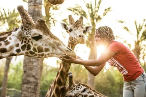 365Tickets Oasis Park Fuerteventura - Camel Safari