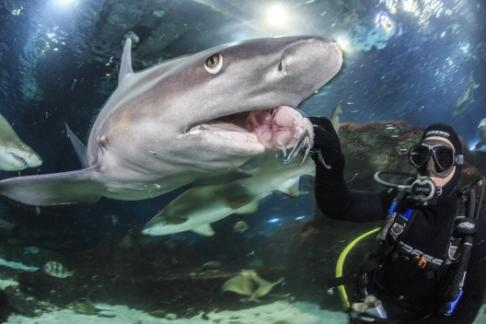 Click to view details and reviews for Barcelona Aquarium Laquarium.