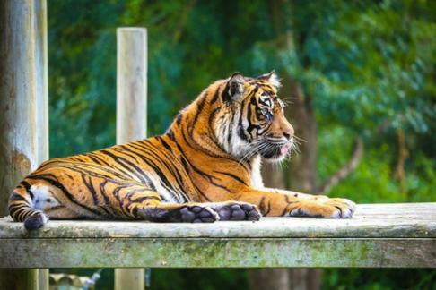 Click to view details and reviews for Chessington World Of Adventures Resort 1 Day Zoo Day Ticket.