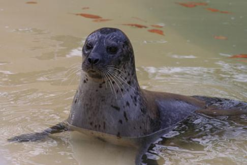 Click to view details and reviews for Cornish Seal Sanctuary Gweek.