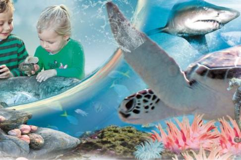 Click to view details and reviews for Manly Sea Life Sanctuary Entry Only.