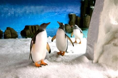Click to view details and reviews for Sea Life Melbourne Aquarium Entry Only.