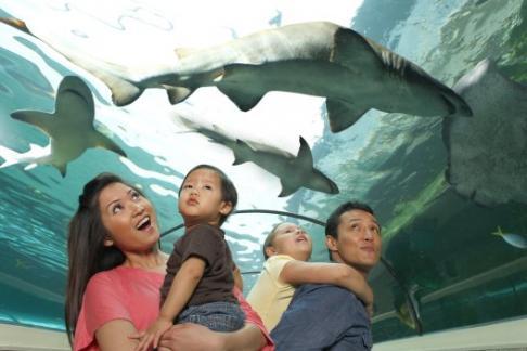 Sea Life Sydney Aquarium 4 Attractions Combo Ticket