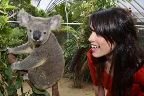 Wild Life Sydney Zoo 3 Attractions Combo Ticket